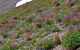 Washington State Flowers